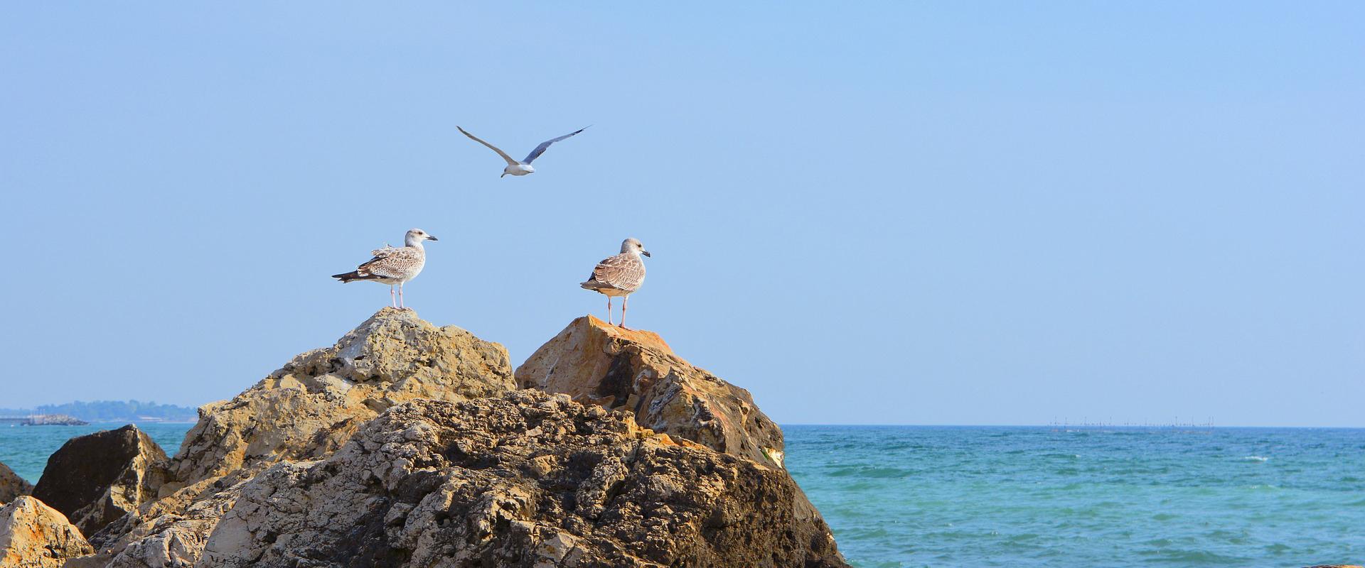 Image result for litoralul romanesc